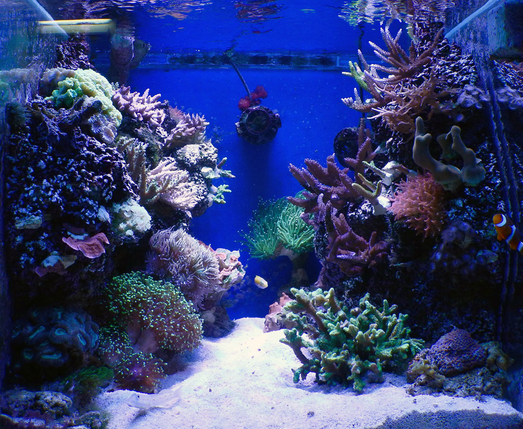 Show off your nano tank aquascape | Page 7 | REEF2REEF ...