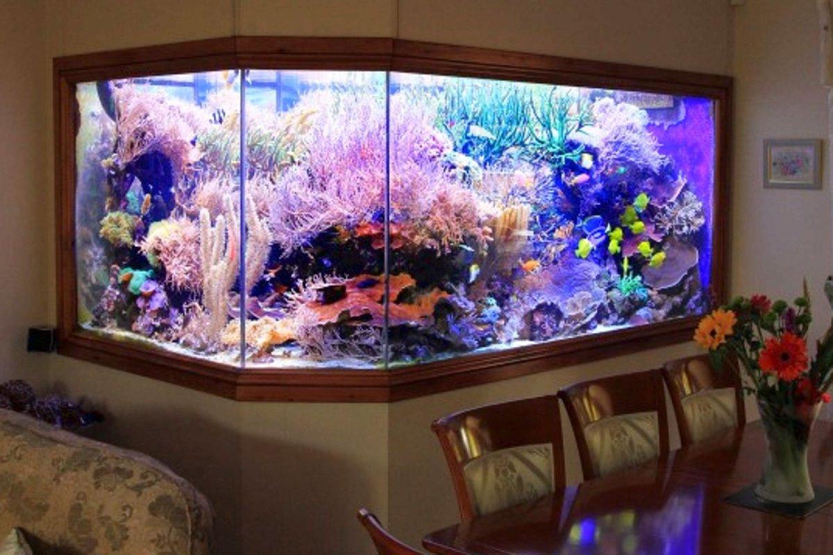 Eli 39 s 30 000 liter home reef aquarium and a 150k aquarium for Reef fish tank