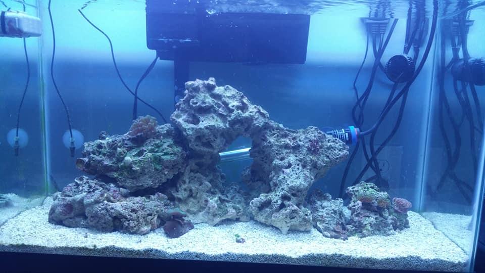 02-12-20 Aquascape.jpg