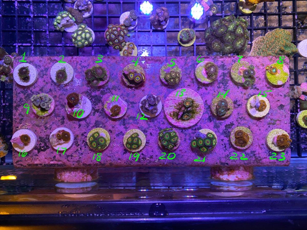 09-26-2020 corals 1-1.jpg