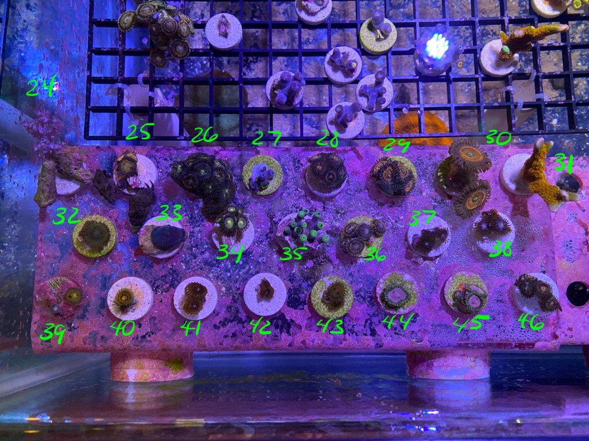 09-26-2020 corals 2-2.jpg