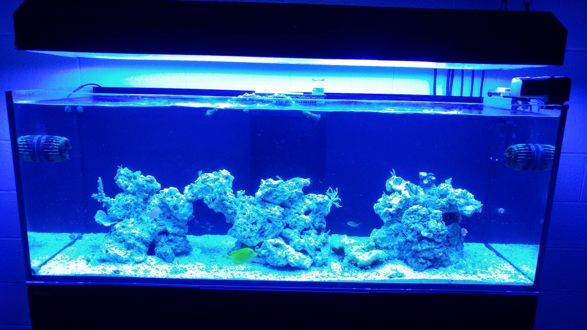 How do you do aquascaping? | REEF2REEF Saltwater and Reef ...