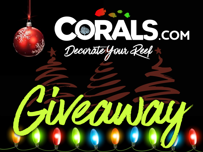 1 giveaway coralscom.jpg