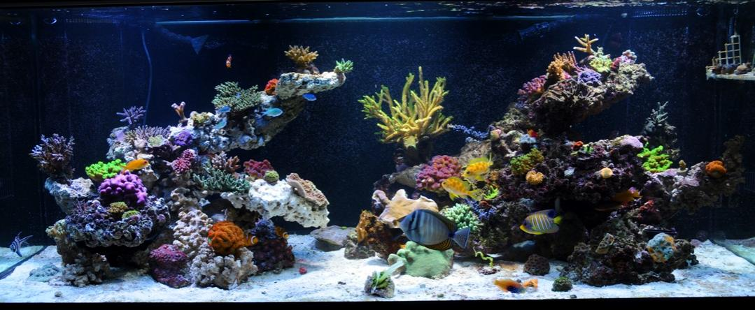 Show Off Your Large Tank Aquascape Page 5 Reef2reef Saltwater And Reef Aquarium Forum