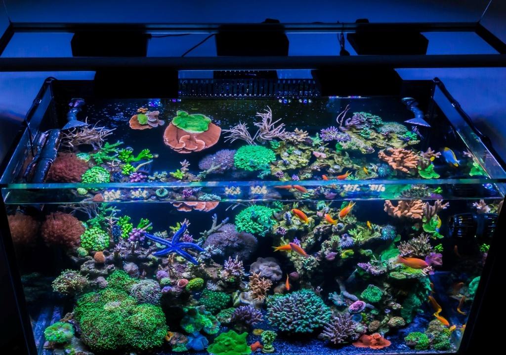 So Many Ways To Mount Your Aquaillumination Lights How