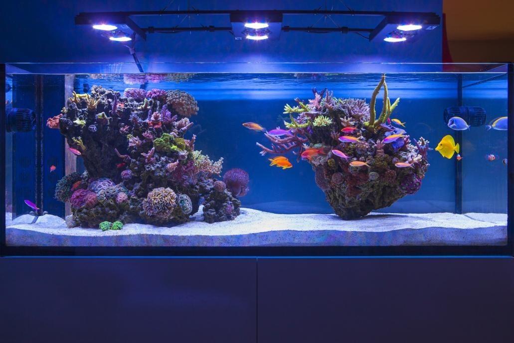 Aquascape Ideas Live Rock Aquascape Designs