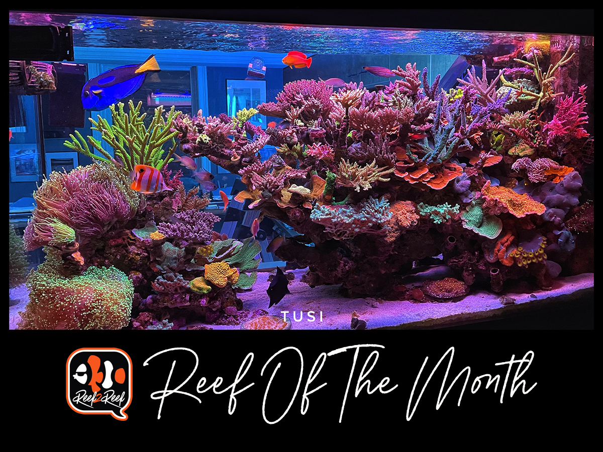 1 Reef of the month title.png