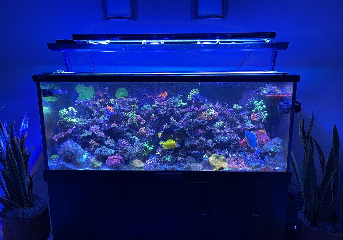 1 - rt365 - coral408.jpeg