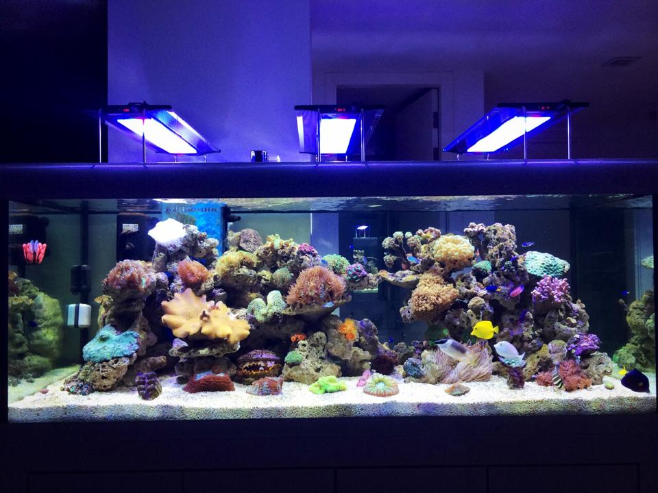 Equipments for fish only tank reef2reef for Fish only saltwater tank