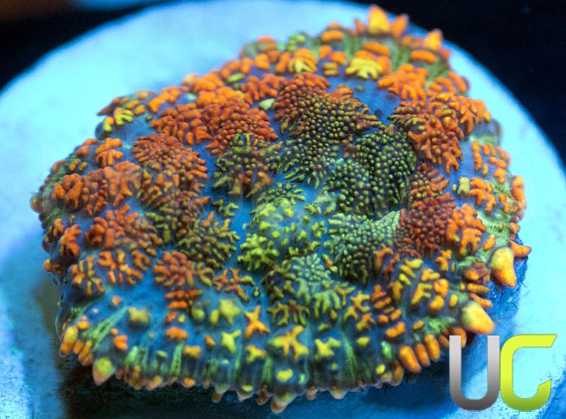 11-Mushroom-unsure-L1.jpg