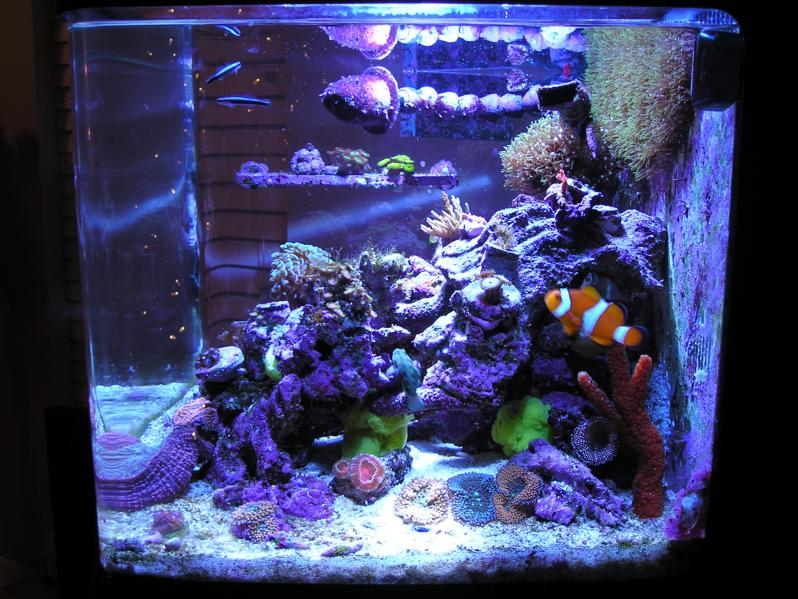 Fsu1dolfan 39 s biocube 29g reef2reef saltwater and reef for Bio cube fish tank