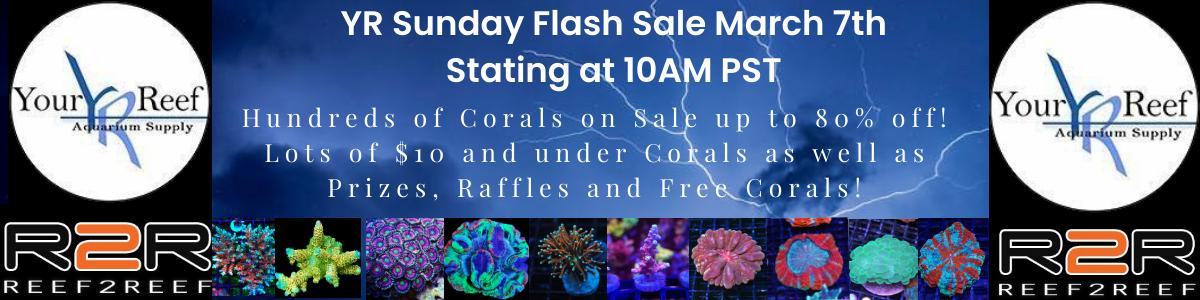 1200x300 March 7th Sunday Flash Sale.jpg