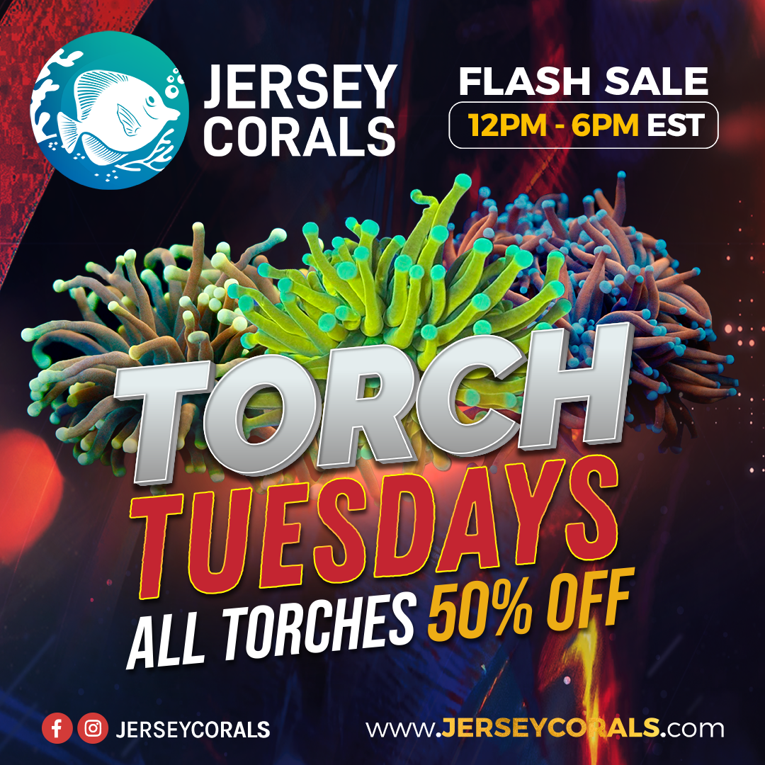 12pm start TORCH TUESDAYS Social Media Post Square 1080 x 1080.png