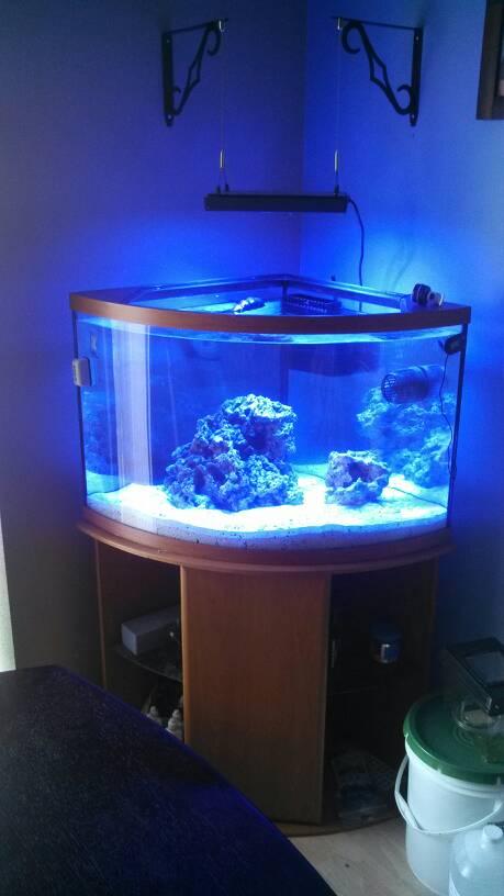 fish tank lighting ideas. 1394147342558.jpg Fish Tank Lighting Ideas