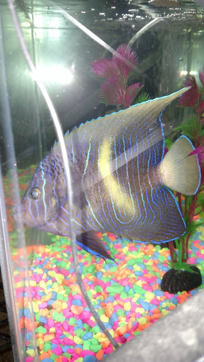 Freshwater aquarium fish boise idaho - Long And Drawn Out With A Lot Of Hopeful Thinking This Is Very Stressful And Depressing For Me And My Fishy Friends Please Help Me Diagnose And Decide