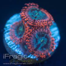 Home | iFragit Corals