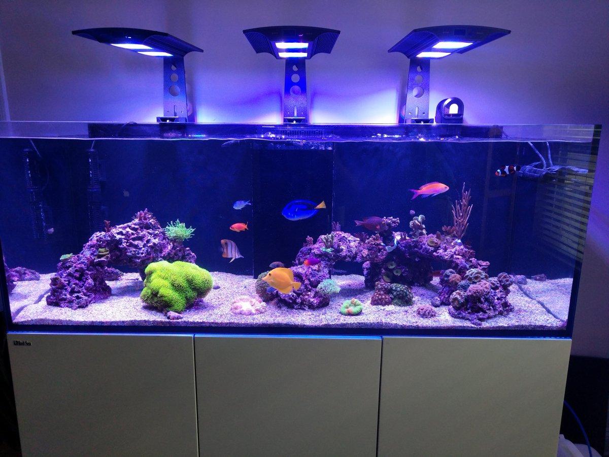 Ecotech Marine Vectra M1 Fish Tank Aquarium Return Pump Marine Reef Sump Colours Are Striking Pumps (water) Pet Supplies