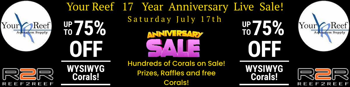 17 year anniversary sale.jpg