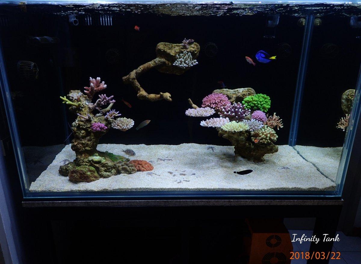 reef2reef saltwater and reef aquarium forum