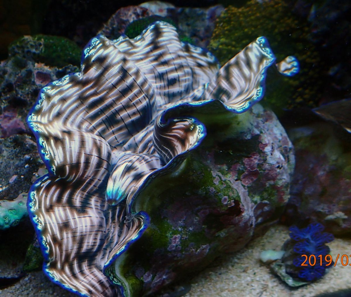 190306-180-mm-clam.jpg