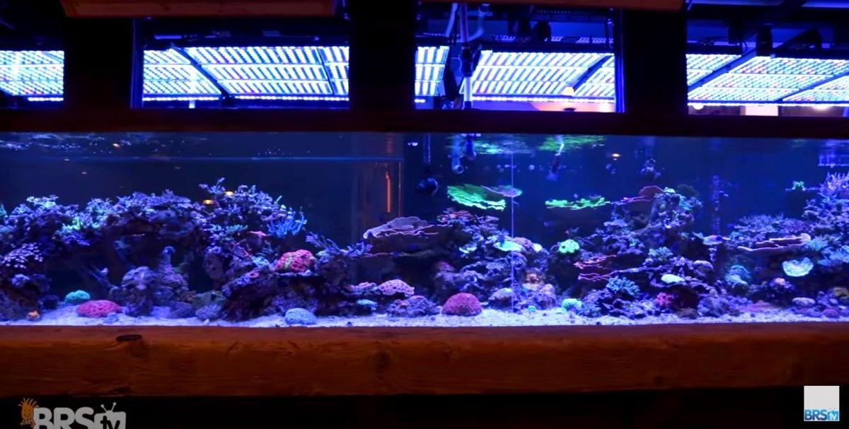 2,000 gal reef tank Orphek Atlantik V4 Gen2.jpg