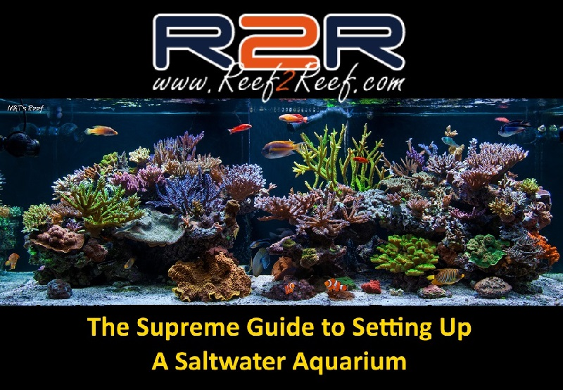 the supreme guide to setting up a saltwater reef aquarium