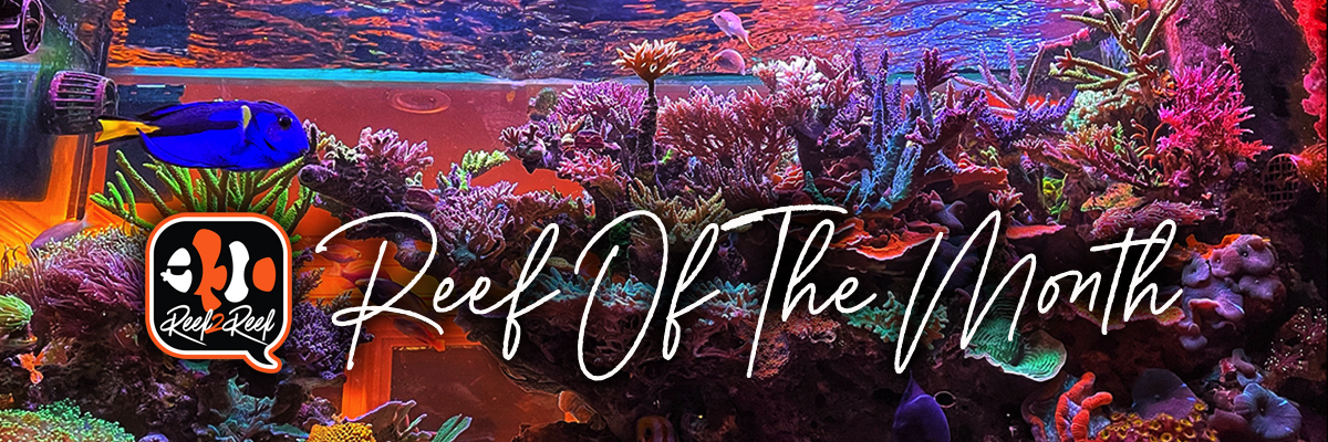 2 Reef of the month header.png