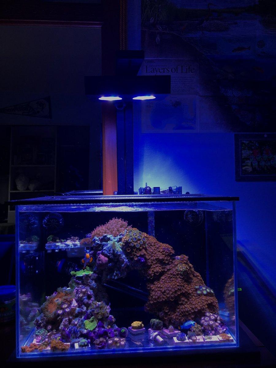 2 - RT365 - Fishninja.jpeg