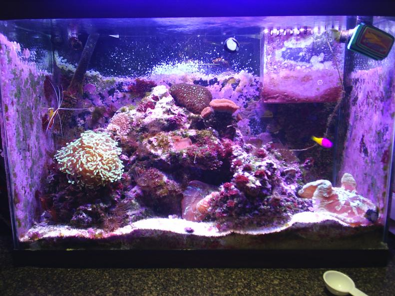 Custom 230 peninsula build reef2reef saltwater and reef for 20 gallon saltwater fish tank