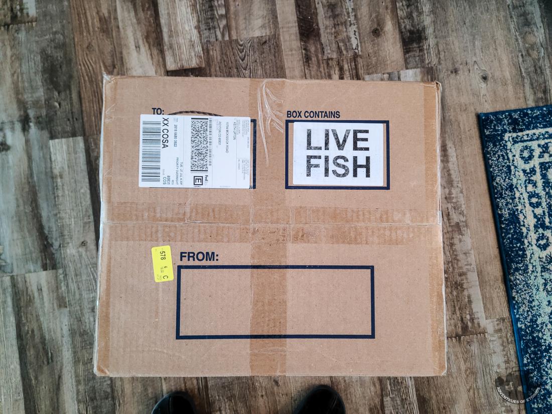 200gBuildFish-145345.jpg