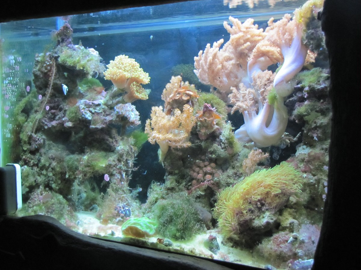 2012 GHA reef.jpg