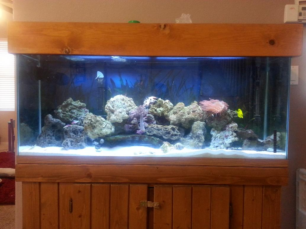 In over my head but slowly learning 210 gallon for Free fish tanks craigslist