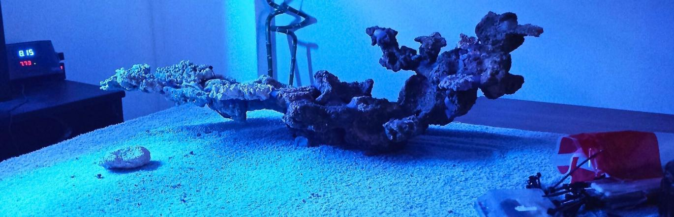 Minimalist Aquascaping Page 5 Reef2reef Saltwater And Reef Aquarium Forum