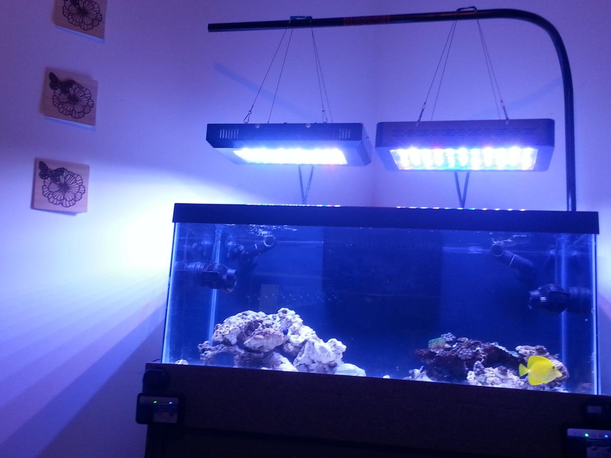 How Do You Hang Your Lights Looking For Ideas