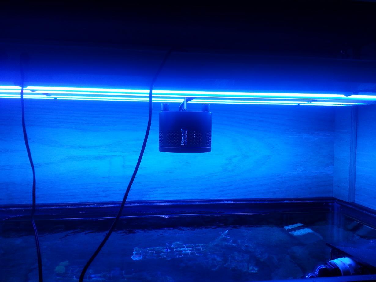 t5 led combo reef2reef saltwater and reef aquarium forum. Black Bedroom Furniture Sets. Home Design Ideas