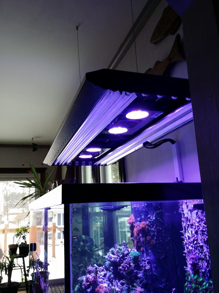 led radion t5 combos who 39 s got em page 2 reef2reef saltwater and reef aquarium forum. Black Bedroom Furniture Sets. Home Design Ideas