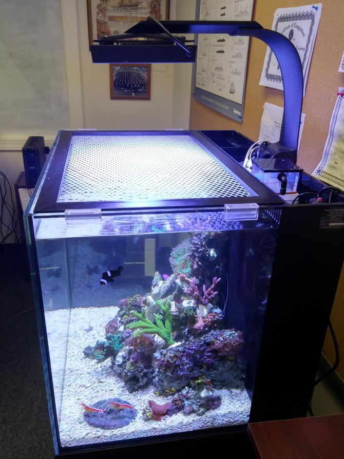 Retired the 29 Biocube for a Innovative Marine 40 Gallon ... 10 Gallon Home Aquariums