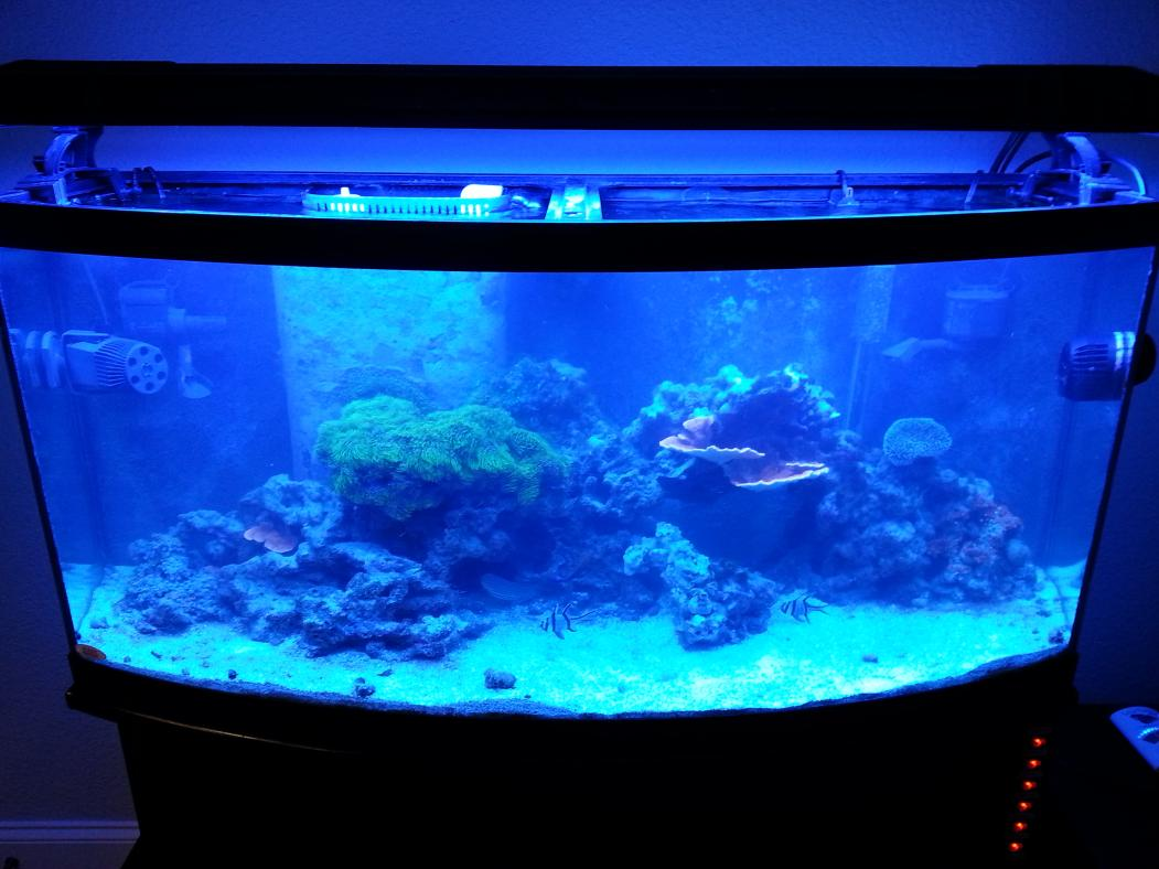 Sale 72g bowfront aquarium reef tank with stand for 200 gallon fish tank for sale