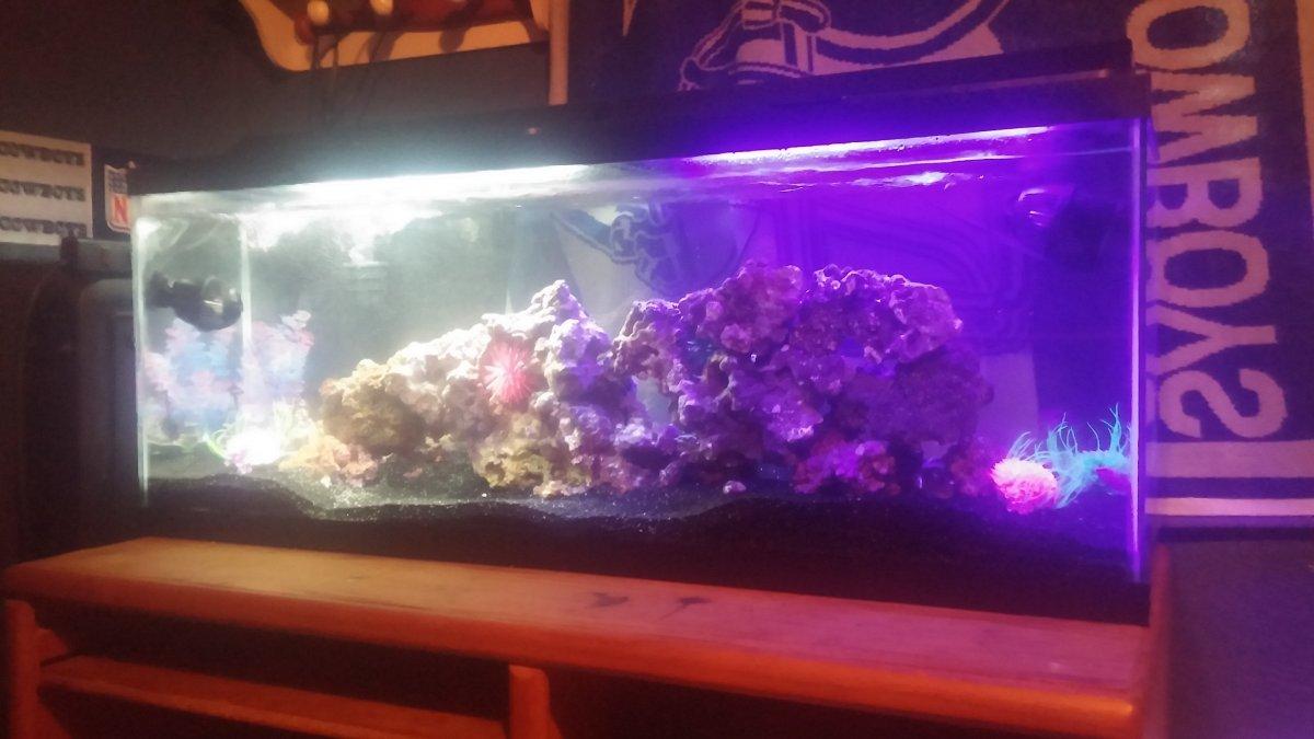 how to grow arowana fish faster