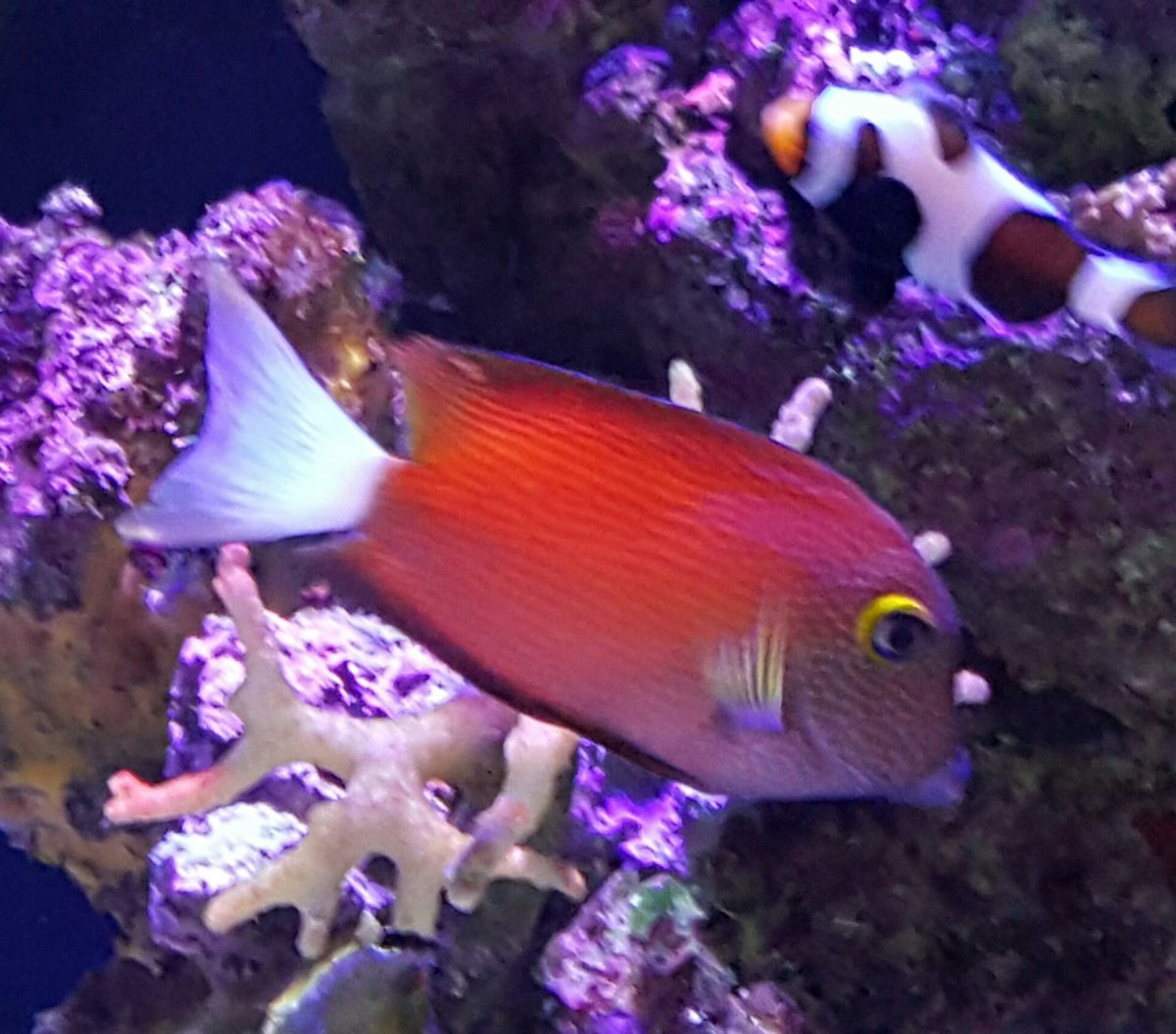 Something Blue? Purple? Yellow? -Bright Vibrant Fish that You Love ...