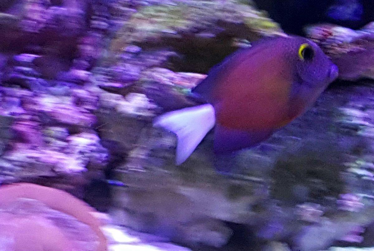 Fish to have in your aquarium - 20160520_105855 Jpg