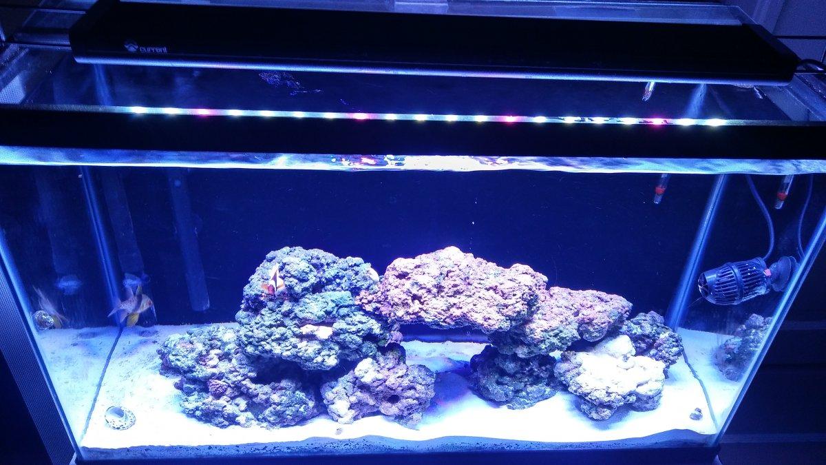 current orbit marine pro reef2reef saltwater and reef aquarium forum