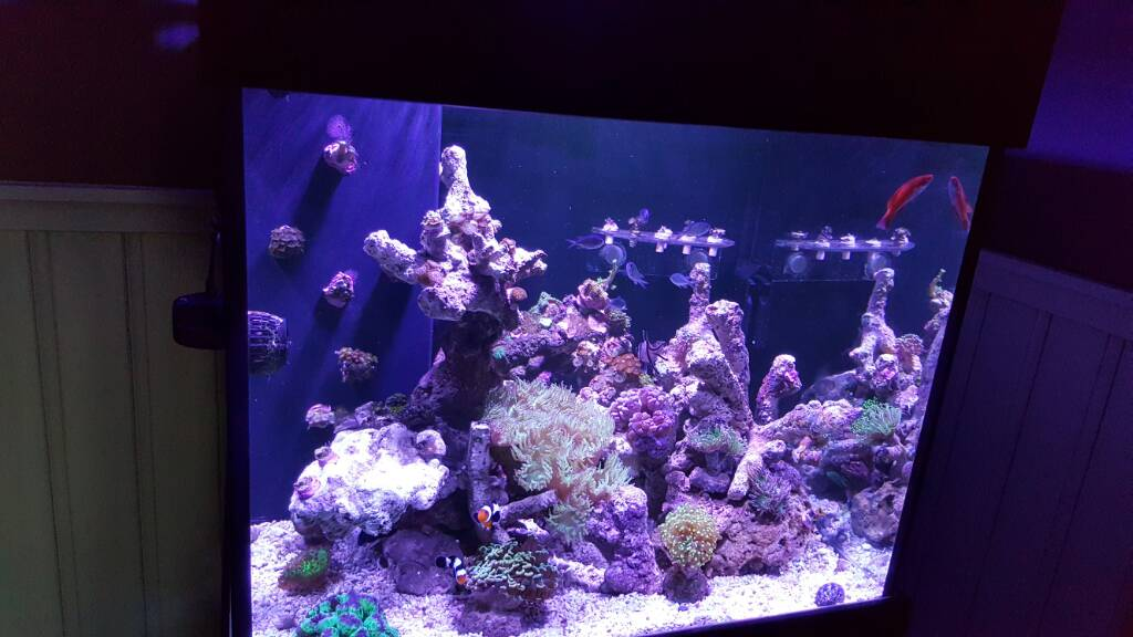 Show off those great CUBE TANK AQUASCAPES! | Page 2 ...