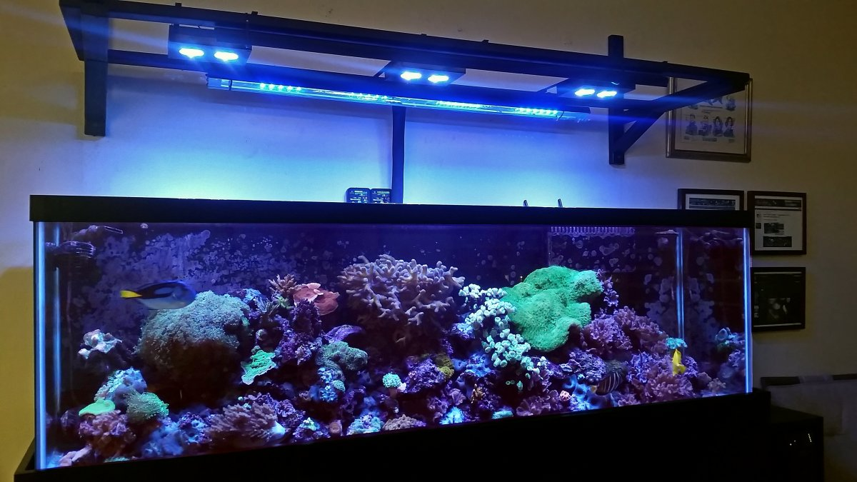 My 125 gallon reef tank new setup! | REEF2REEF Saler and ...  Gallon Aquarium Home Design on 55 gallon aquarium designs, 125 gallon marineland, 36 gallon aquarium designs, 75 gallon aquarium designs, home aquarium designs, 50 gallon aquarium designs,