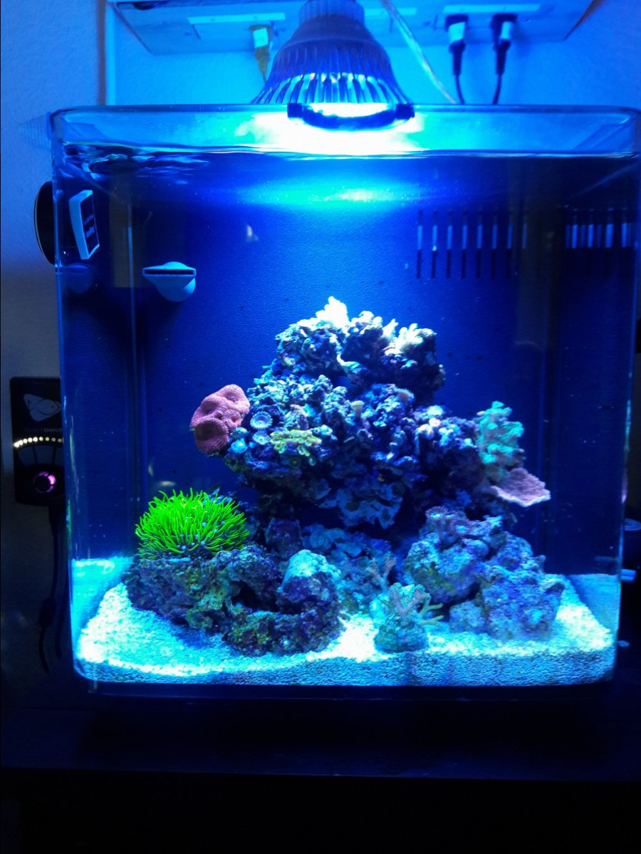 reef-pi :: An opensource reef tank controller based on Raspberry Pi