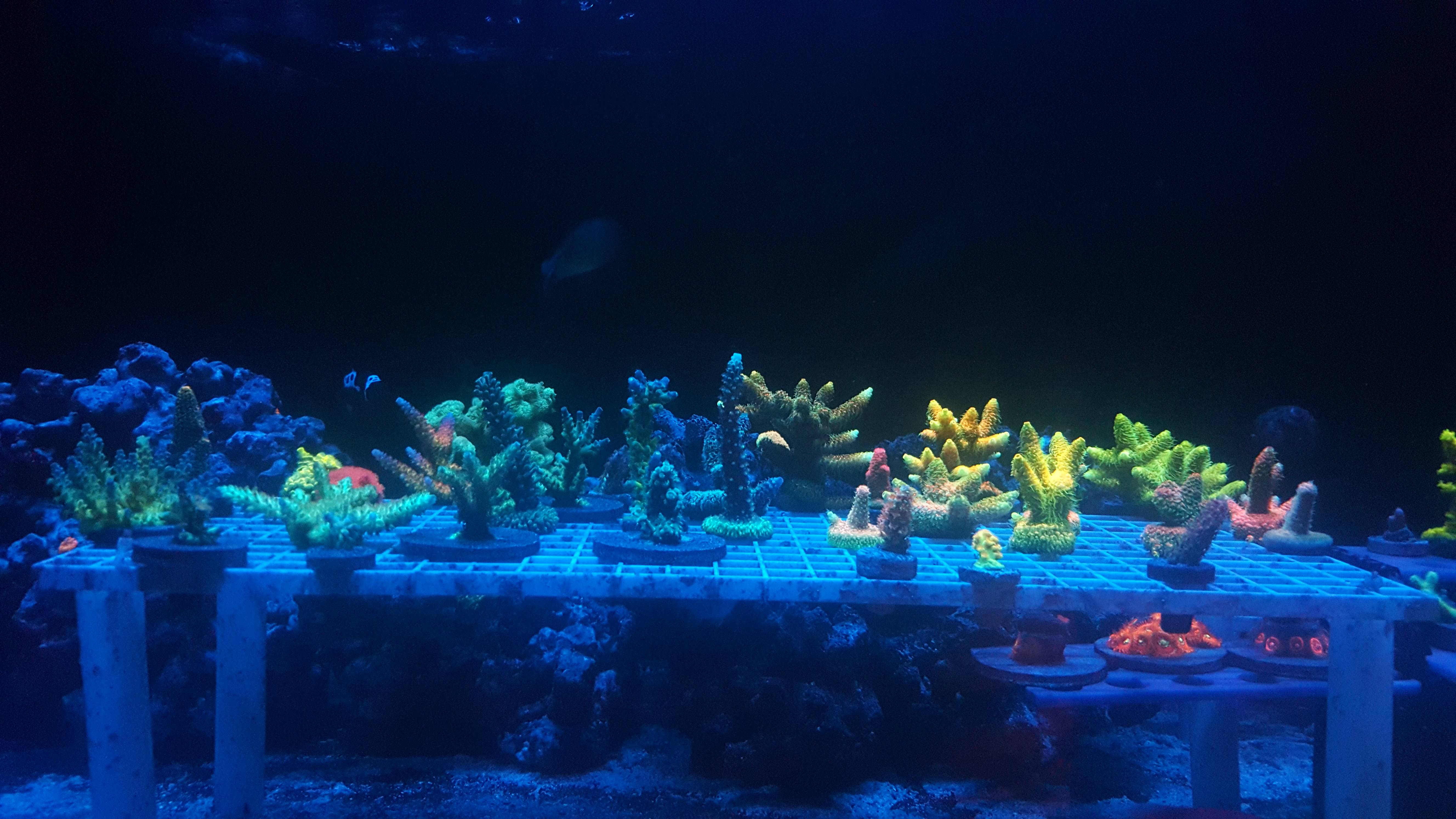 Freshwater aquarium fish boise idaho - Here S A Picture For Reference