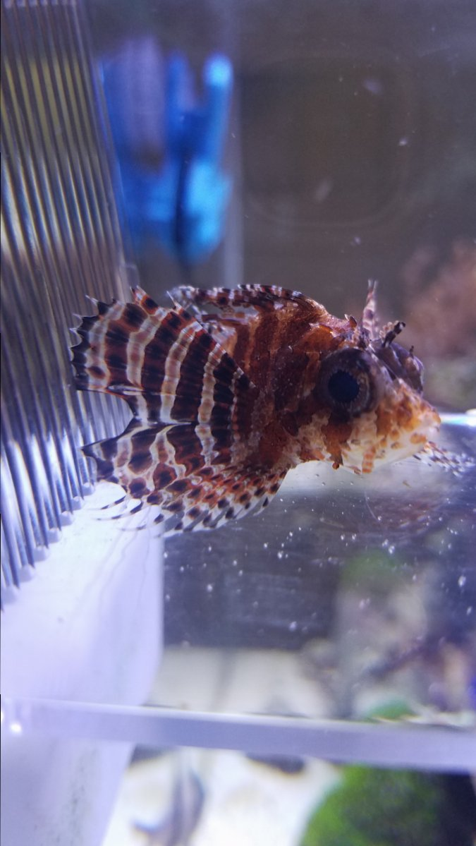 Fish in my aquarium are dying - 20170418_094749 Jpg