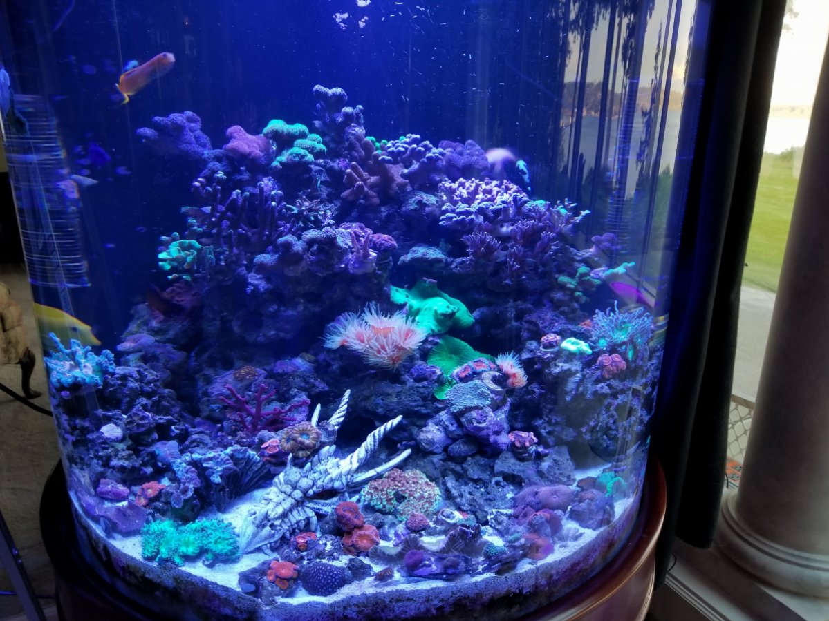 Aquascaping a Tall Tank - Suggestions? | REEF2REEF ...