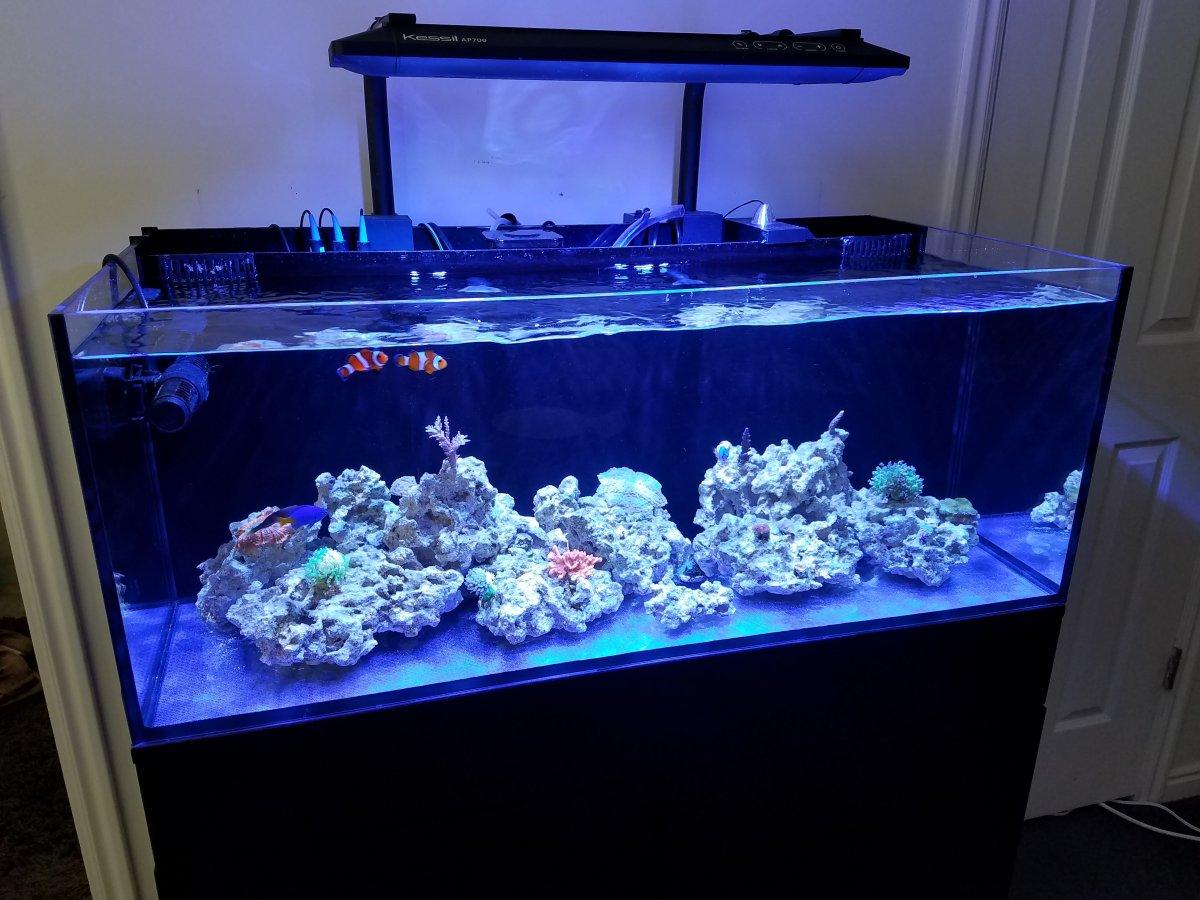 Cobalt Aquatics C-Vue 40 AIO Aquarium | REEF2REEF ...