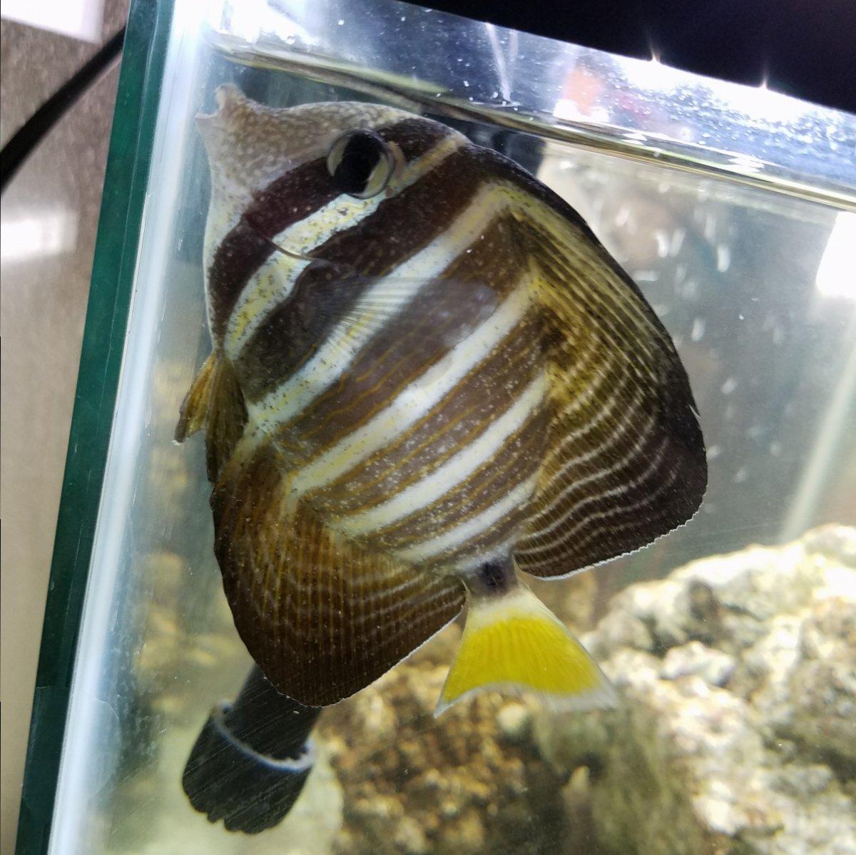 SICK TANK | REEF2REEF Saltwater and Reef Aquarium Forum